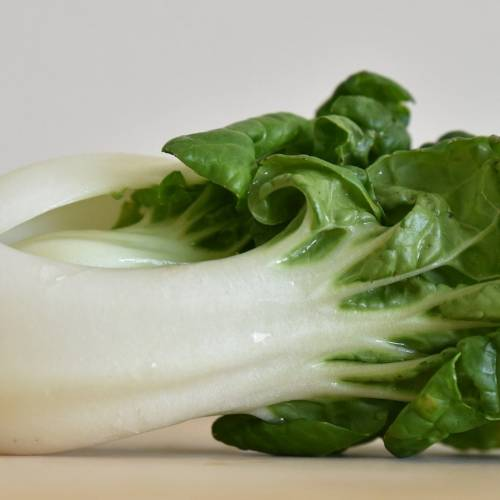What We're Cooking with Now: Bok Choy