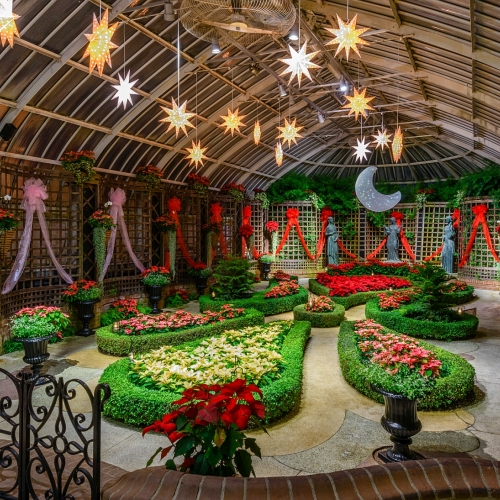 This Week at Phipps: Dec. 5 – 11