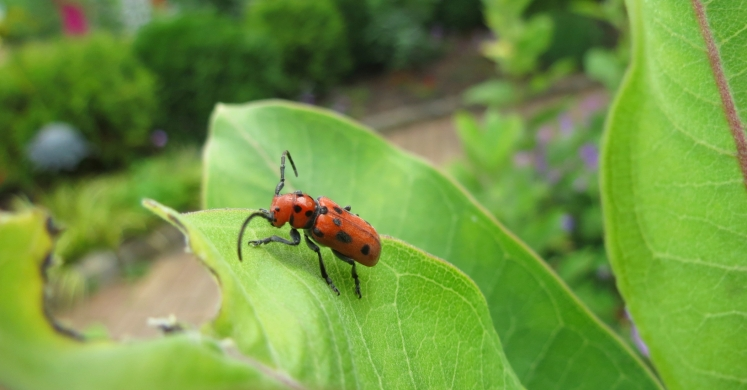 Greener Gardening: Sustainable Insect Control