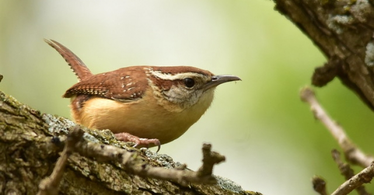#bioPGH Blog: Birding by Ear