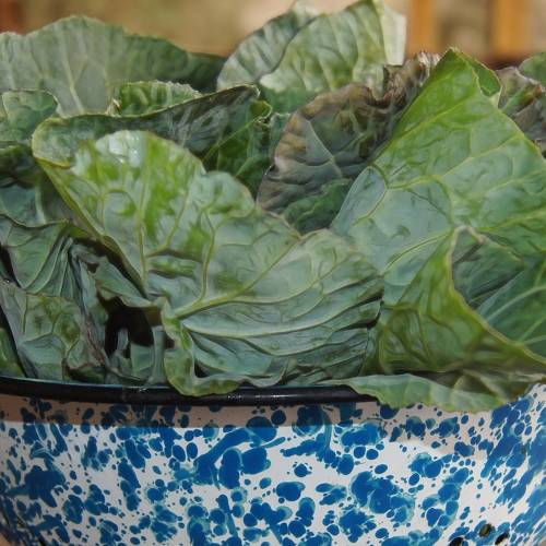 What We're Cooking With Now: Collard Greens