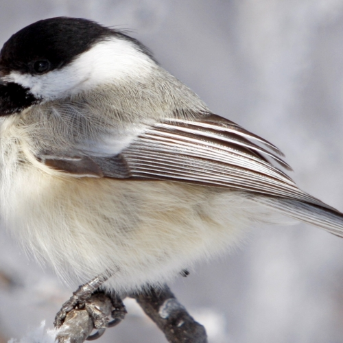 #bioPGH Blog: Year-round Feathered Friends