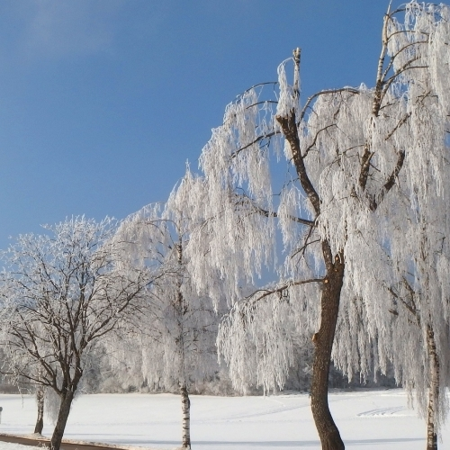 #bioPGH Blog: Trees in the Winter