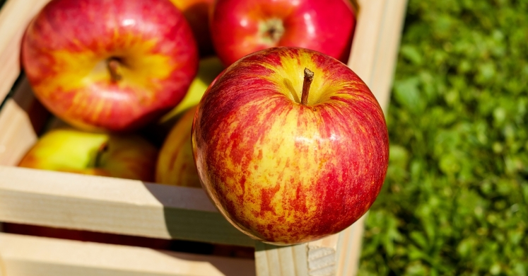 #bioPGH: An Apple for the Ages