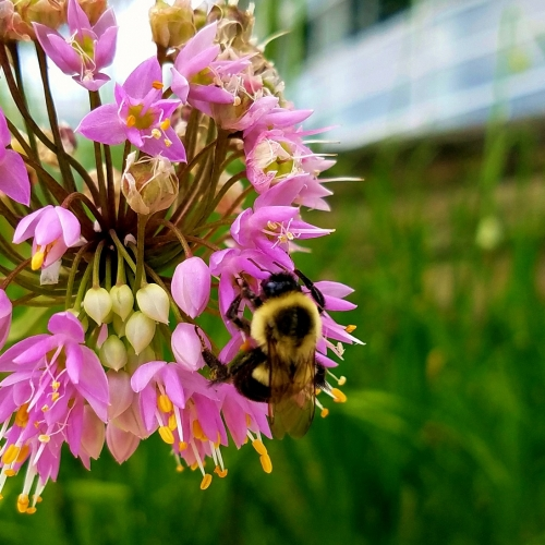 #bioPGH Blog: National Pollinator Week 2018