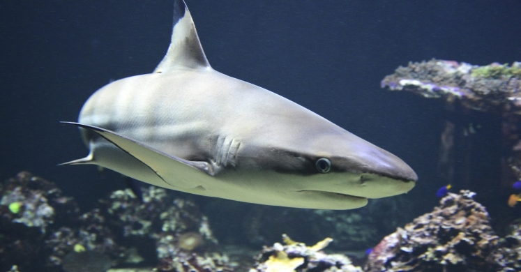 #bioPGH Blog: A Pennsylvania Nod to Shark Week