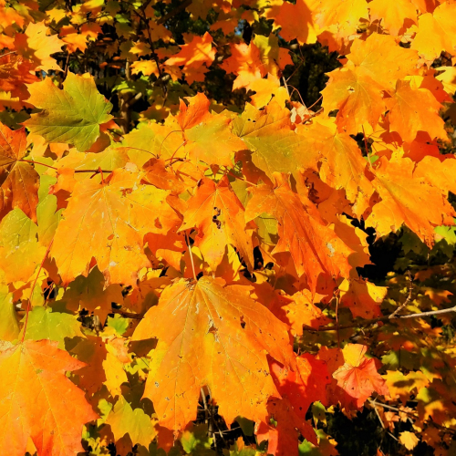 #bioPGH Blog: Wandering Through the Leaves