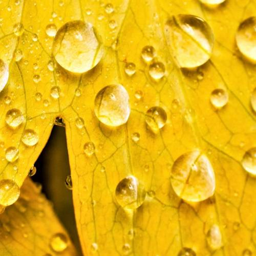 #bioPGH Blog: Rain, Rain and More Rain!