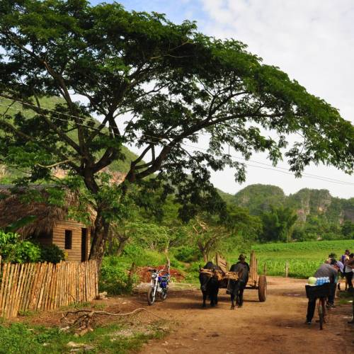 Farming, Endemic Birds and Cigars in Cuba
