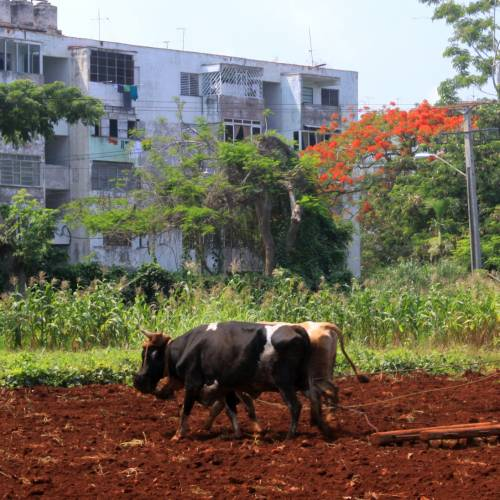 Organic Farming and Indigenous Art in Cuba