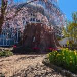 This Week at Phipps: May 21 – 27