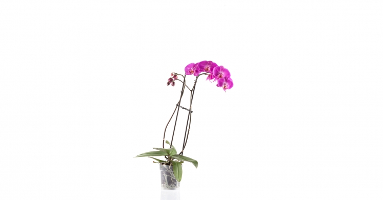 Ask Dr. Phipps: Orchid Care