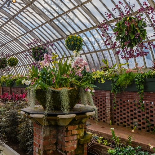 This Week at Phipps: Feb. 19 – 25