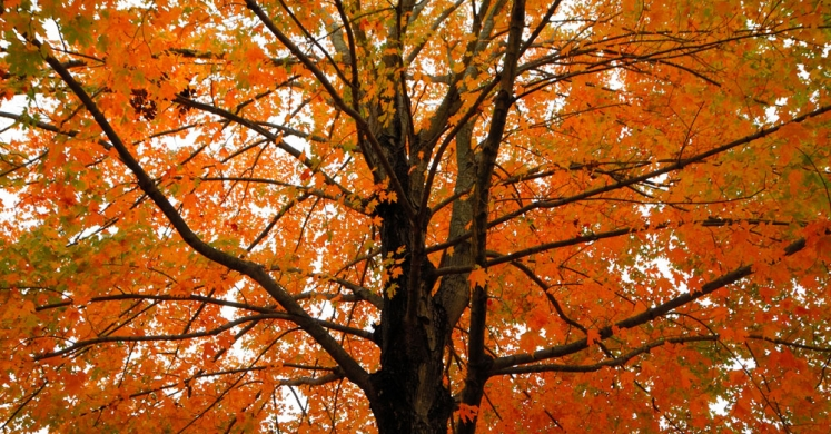 #bioPGH Blog: Fall Foliage