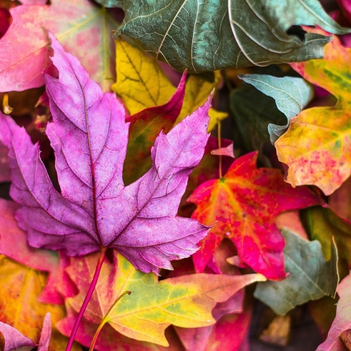 #bioPGH: Fantastic Foliage and Where to Find It