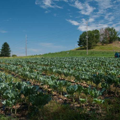Policy Update: The Farm Bill