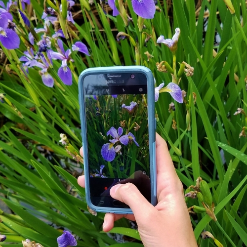 #bioPGH Blog: iNaturalist and the City Nature Challenge – Part One