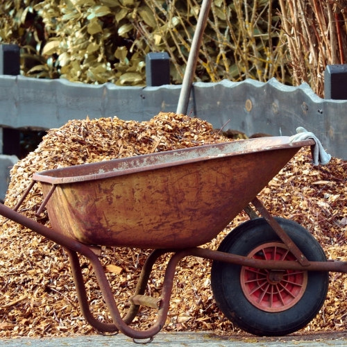 Ask Dr. Phipps: Mulch on Our Minds