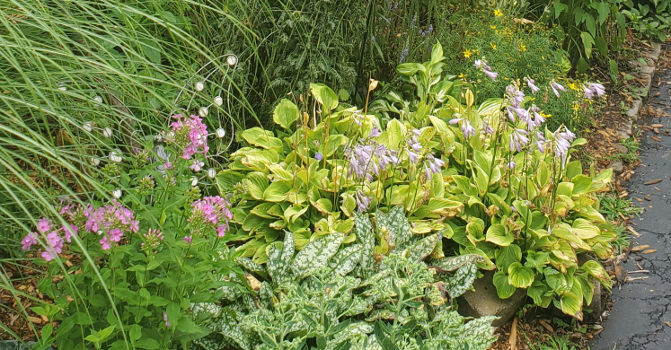 Small Gardens, Big Impact: Native Micro-Garden
