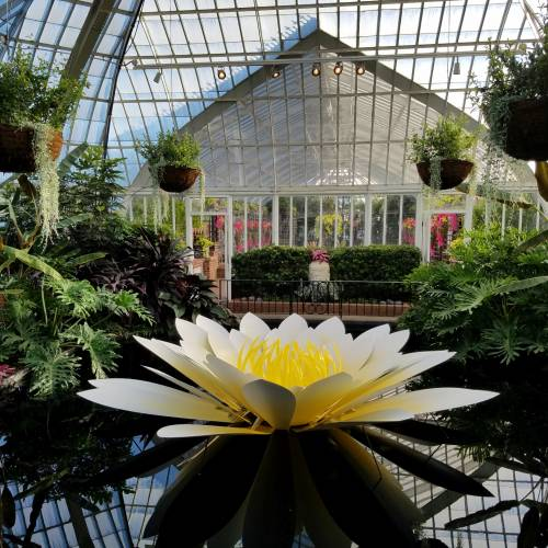 This Week at Phipps: May 15 – 21