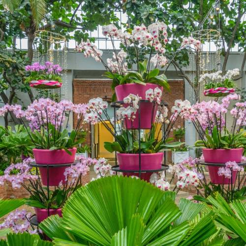 Inside Eye Candy: A Guide to Orchid and Tropical Bonsai Show