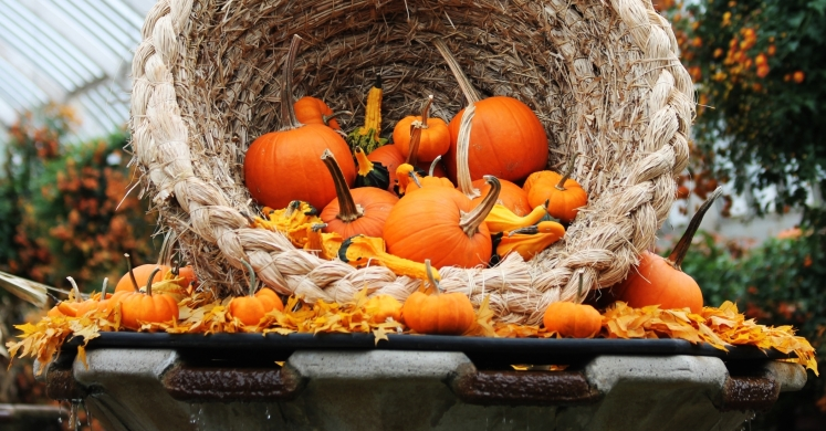 #bioPGH Blog: Pumpkins