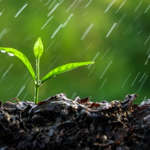 #bioPGH Blog: The Scent of Earth After a Rain