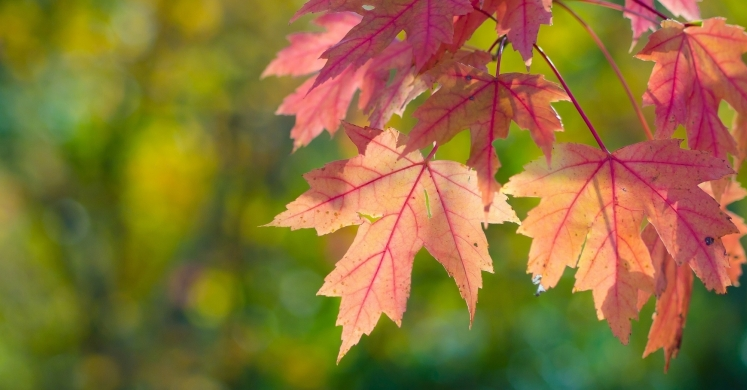 #bioPGH blog: The Colors of October