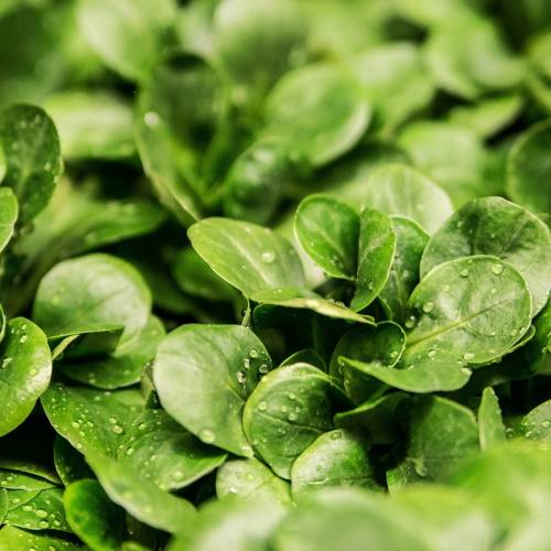 Four Foods to Green-Up Your Plate This March
