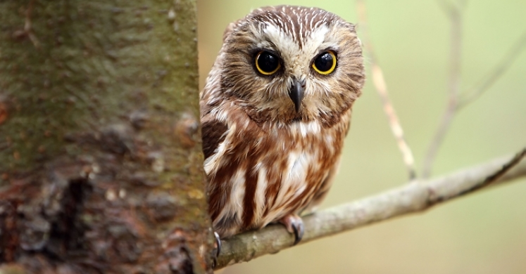 biopgh blog northern saw whet owls phipps conservatory and