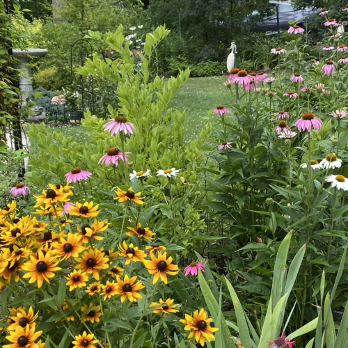 Small Gardens, Big Impact: Native Plant Oasis