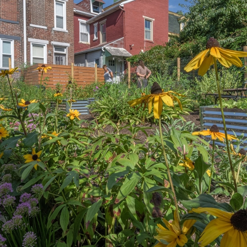 Small Gardens, Big Impact: Permaculture Garden in Lawrenceville