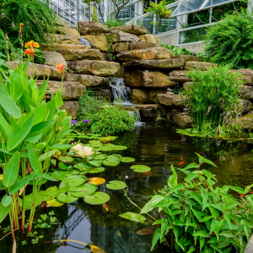 This Week at Phipps: Sept. 12 – 18