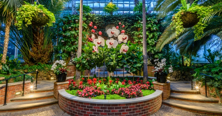 This Week at Phipps: June 12 – 18