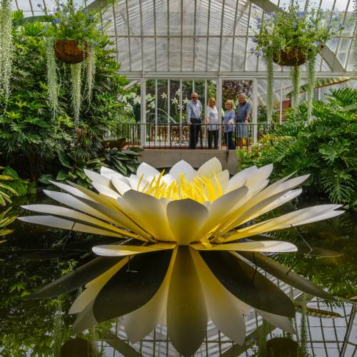 This Week at Phipps: July 24 – 30