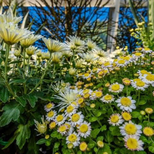 This Week at Phipps: Oct. 9 – 15