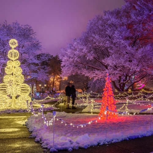 This Week at Phipps: Dec. 19 – 25