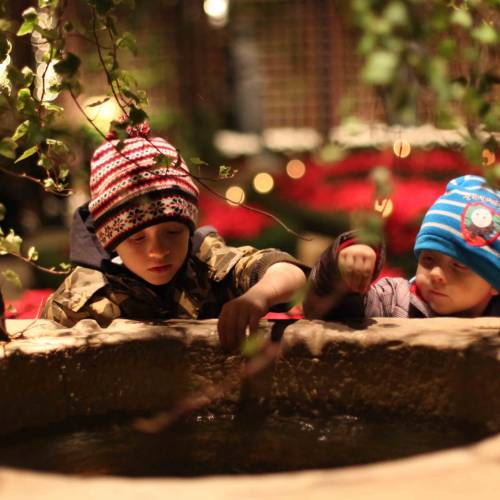 This Week at Phipps: Dec. 26 – Jan. 1
