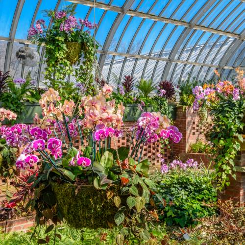 This Week at Phipps: Jan. 9 – 15