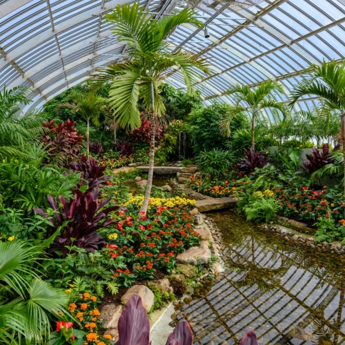 This Week at Phipps: Feb. 6 – 12