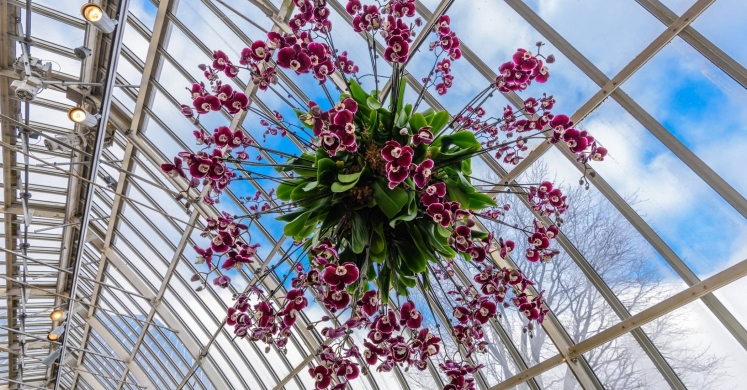 This Week at Phipps: Jan. 15 – 21