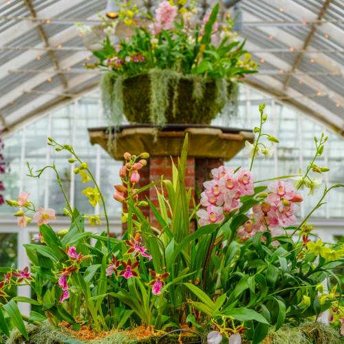 This Week at Phipps: Jan. 22 – 28