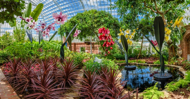 This Week at Phipps: July 10 – 16