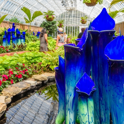 This Week at Phipps: July 31 – Aug. 6