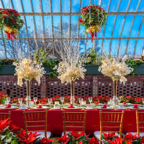This Week at Phipps: Dec. 4 – 10
