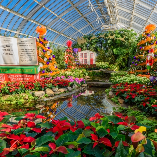 This Week at Phipps: Dec. 11 – 17