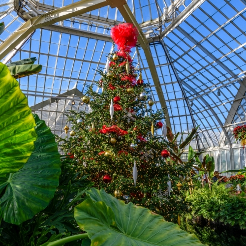 This Week at Phipps: Dec. 18 – 24