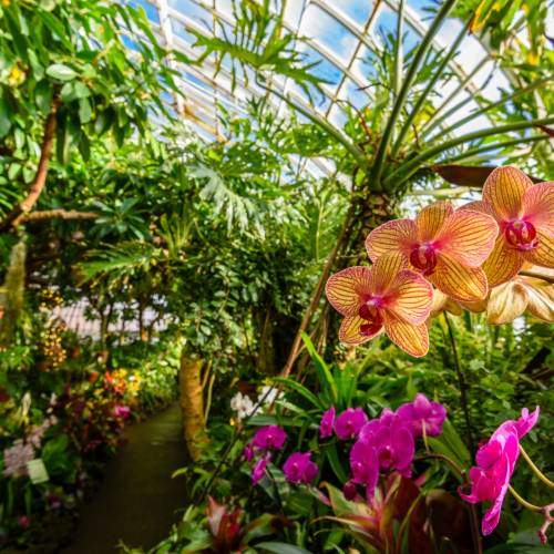 This Week at Phipps: Jan. 29 – Feb. 4