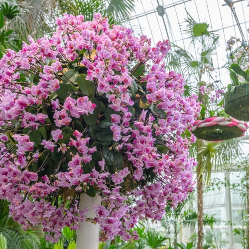 This Week at Phipps: Jan. 21 – 27