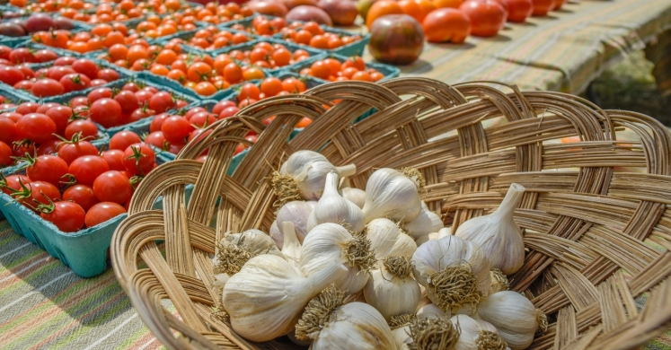 #bioPGH Blog: Tomatoes and Garlic